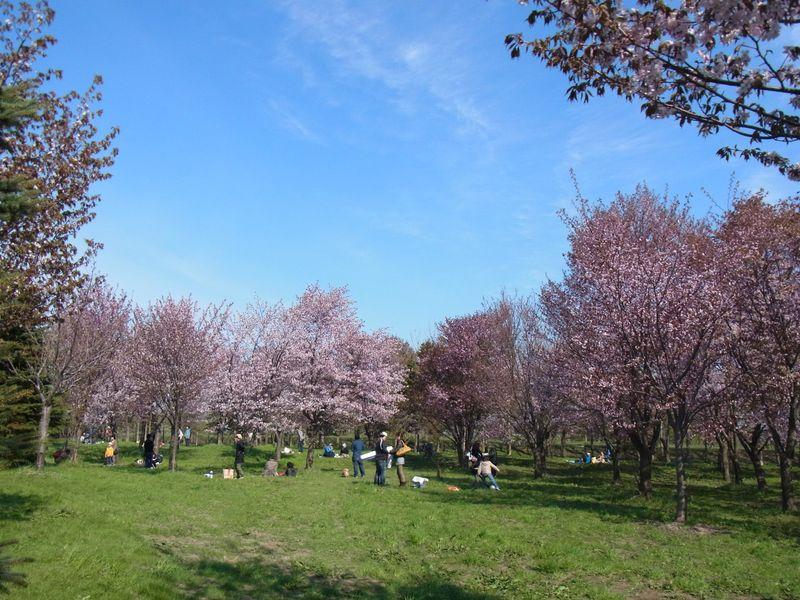 ピクニックするならモエレ沼公園!桜も咲きます