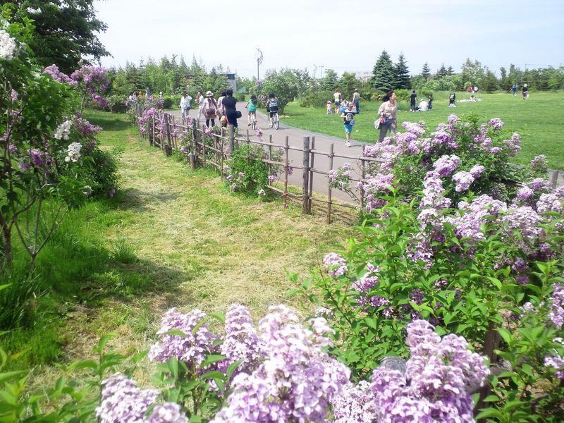 ピクニックをしよう!ライラックがたくさん咲く公園!【川下公園】