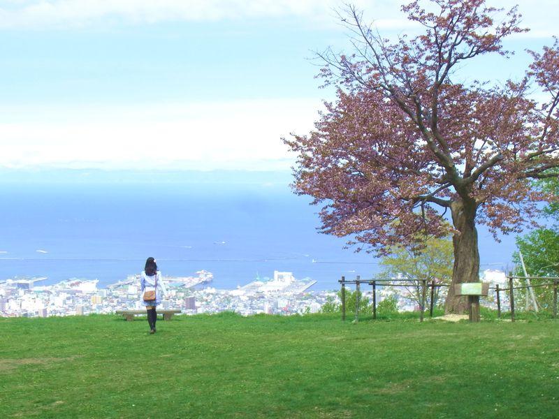 小樽、超絶景桜撮影スポット『天狗山』にハートの形の桜を見に行こう