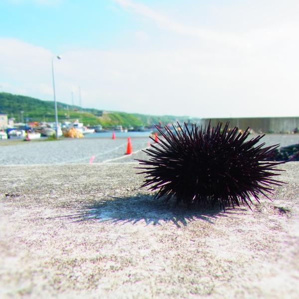 北海道・厚田『あつた港朝市』とれたて殻付き新鮮ウニを買うなら朝市に行こう!!