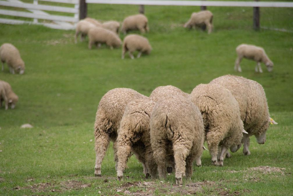 孤独のグルメSeason3第五話『中野区東中野の羊の鉄鍋とラグマン』に出てきたお店まとめ
