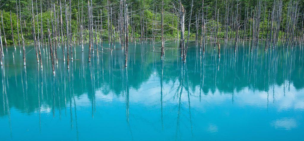 『美瑛・青い池』MacBookの壁紙にも採用された美しい池は北海道に有り