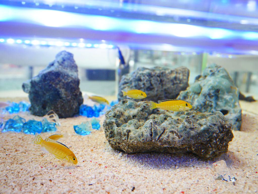 札幌『ダイニングカフェ&バー ニクス』は可愛い魚達に囲まれて幸せになれるアクアリウムカフェ!
