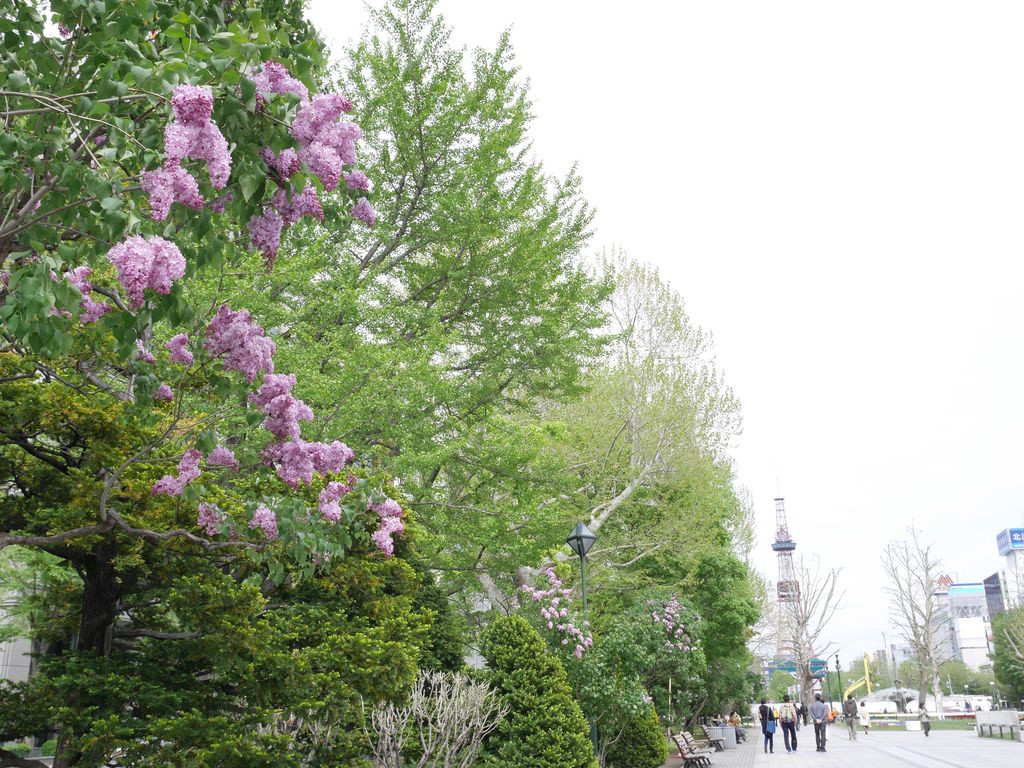 札幌ライラックまつりは腹ペコ成人のための『ワインガーデン』がおすすめ!